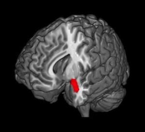 amygdala_mindfulness