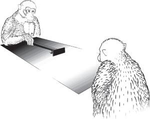 iriki macaque
